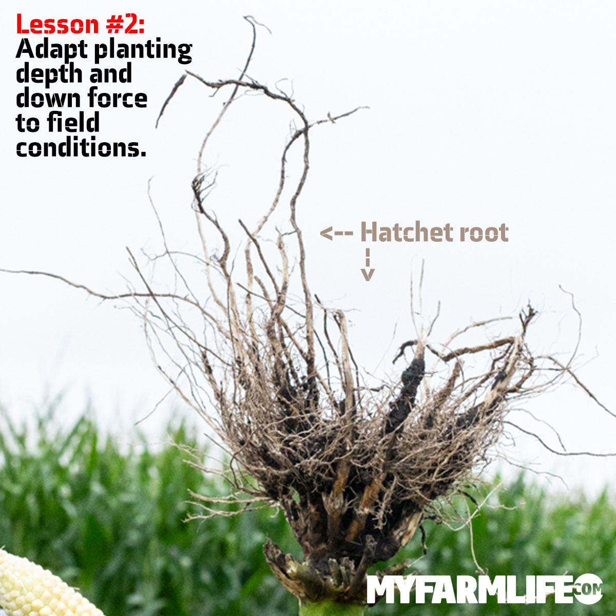 Lesson #2: Adapt planting depth and downforce to field conditions.