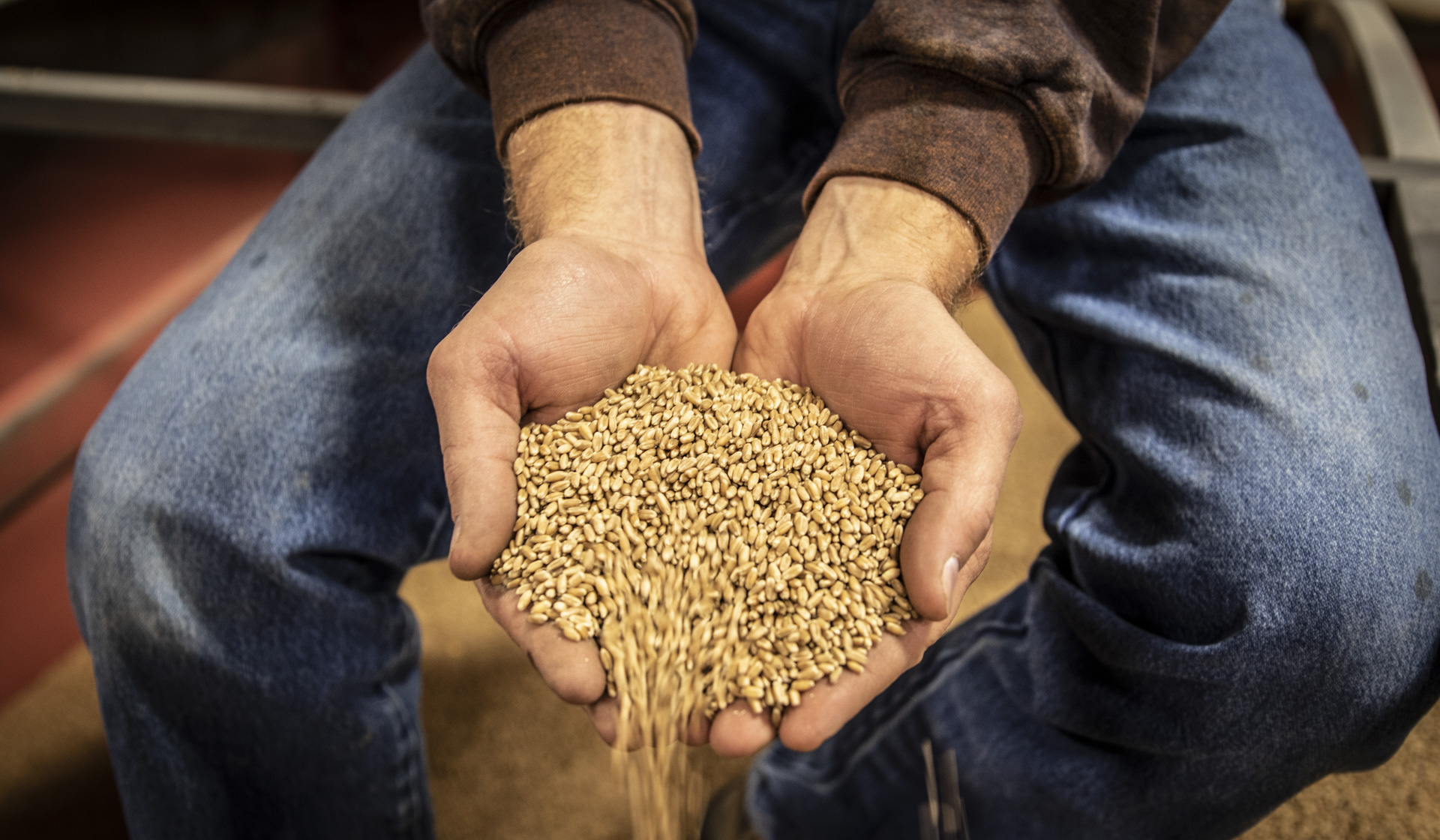 Jim's seed wheat business relies on the purity of the product.