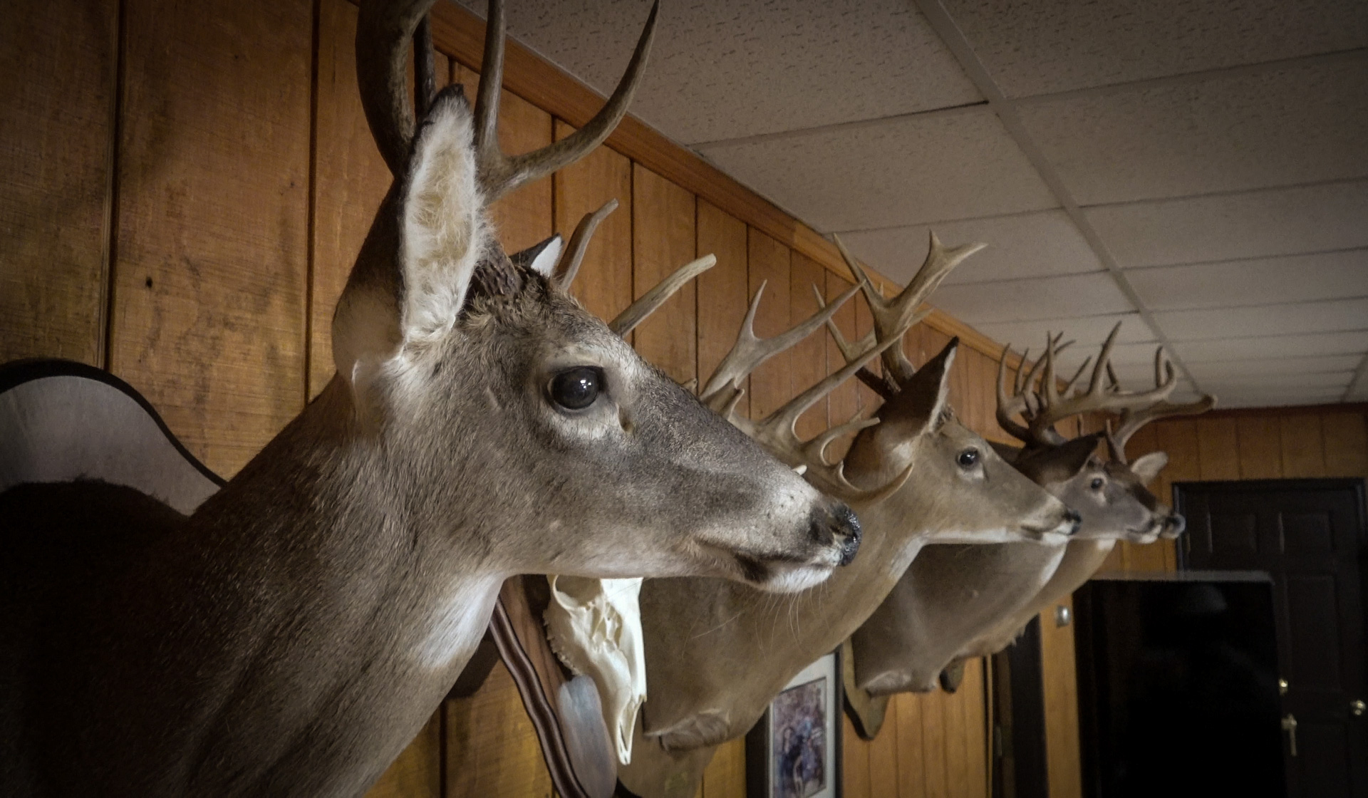 """Buck trophies line the wall of """"The Barn."""""""