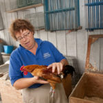 Elaine and CW collect animals, including heirloom breeds of chickens, from farmers all over the country.