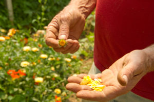 Edible flowers from Jake's Farm are among the unique products available to chefs and the public at FFM.