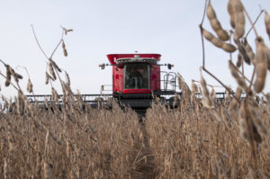 Crop conditions can affect the performance of your combine. Photo: Denny Eilers