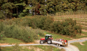 A tractor ride through the orchard.
