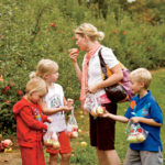The orchard has welcomed as many as 16,000 visitors in one weekend day.