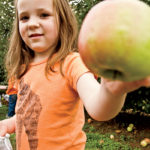 Mercier Orchards' U-pick is a great outing for families.