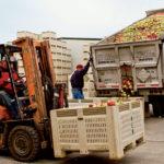 The Merciers grow more than 60 varieties of apples.