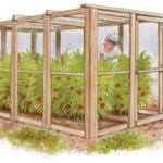 One surefire way of deterring pests is cutting them off from the source. That's where our tomato house comes in.
