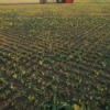 Will Wheeler plants alfalfa in a cross-hatch pattern.