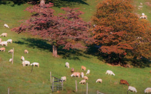Our Best Tips on Restoring a Pasture