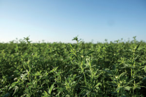 With drip irrigation and quality hay equipment, McGee has nearly doubled his yield and produced award-winning quality alfalfa.