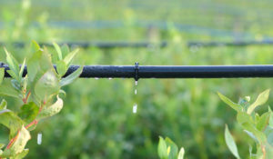 5 tips for planning a drip irrigation system