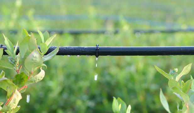 More Drip Irrigation System Basics | myFarmLife.com