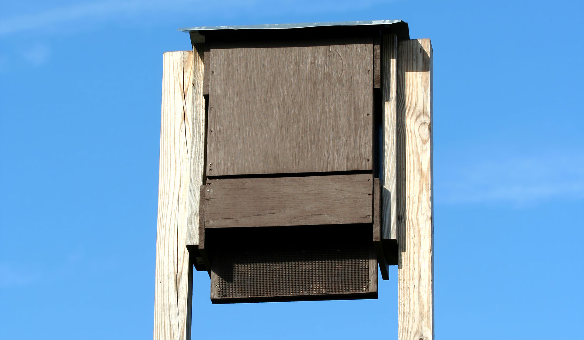 Bats Steady Consumption Of Insect Pests Makes Adding A Bat House To Your Yard Not Only Good For But Smart Choice You