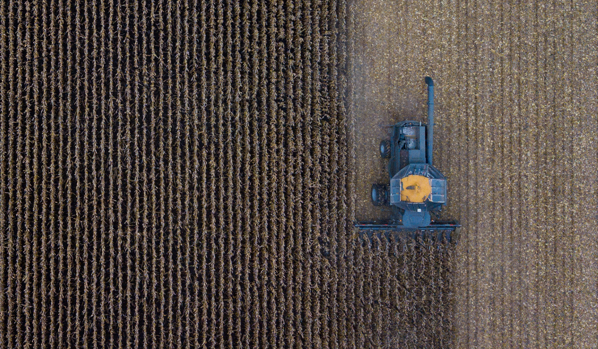 An overhead view of a harvesting machine collecting grain.