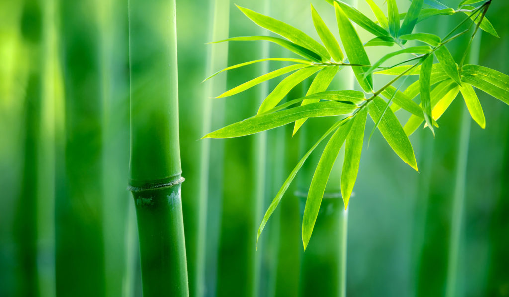 Bamboo. Photo: ©iStockPhoto.com/sofiaworld