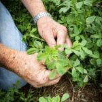 Green says soil samples guide management of his award-winning alfalfa.