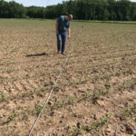 AGCO agronomist Jason Lee estimates the residue coverage of a field of young corn plants using the line transect method.
